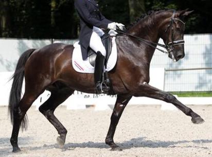 paard zakt door voorbenen